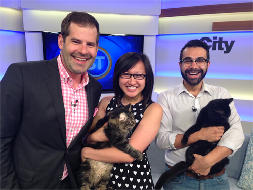 With Edmonton Humane Society cats Coffee & Kaylee on BT Edmonton!
