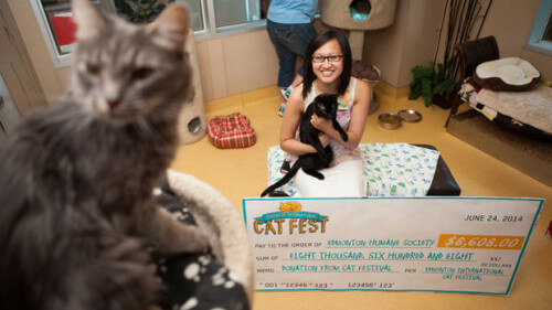 techlifemag - Cat Fest