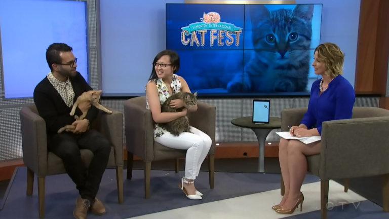 CTV Edmonton Cat Fest