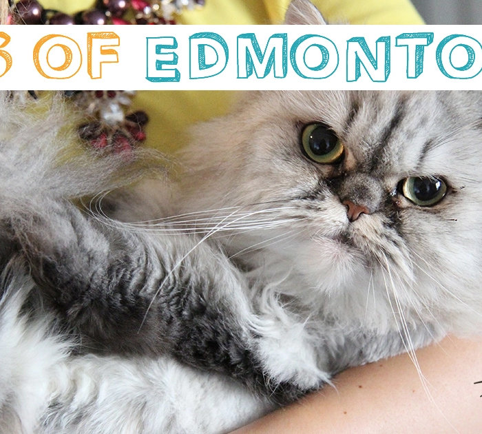 Cats of Edmonton 1