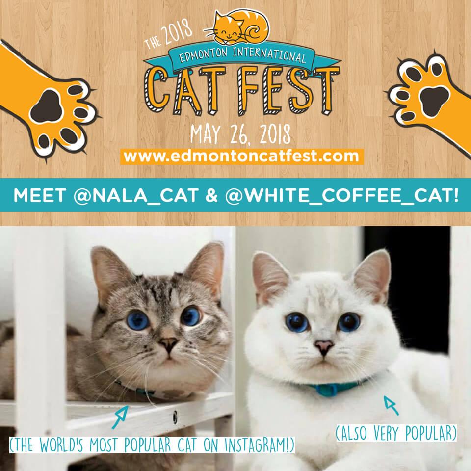 White Coffee Cat and Nala