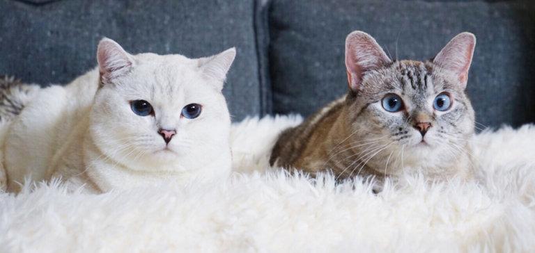 Celebrity Cats Blog
