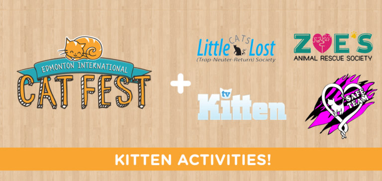 Kitten Activities Blog Banner