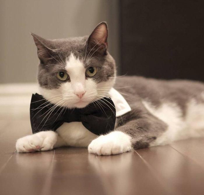 CatFest Contest 1