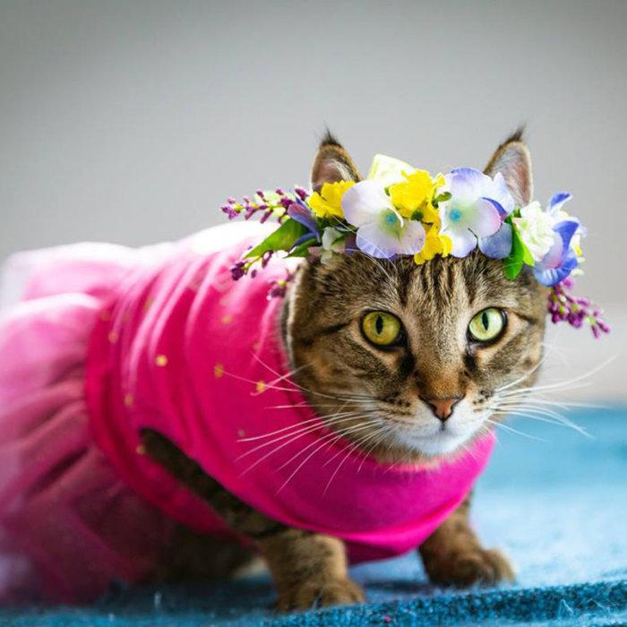CatFest Contest 2