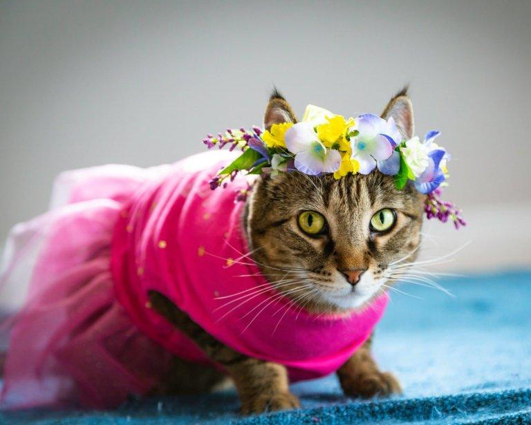 News Edmonton International Cat Fest