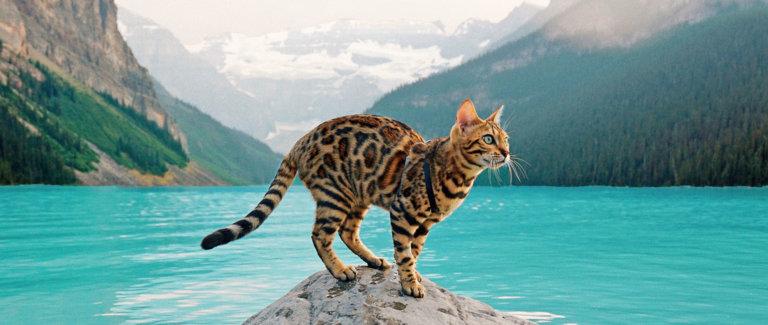Suki the Adventure Cat Explore Edmonton 2