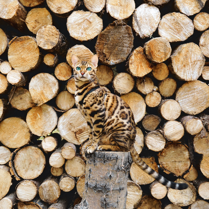 Suki the Adventure Cat Woodpile