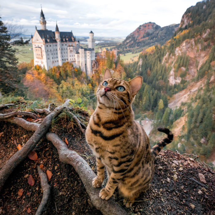 Suki the Aventure Cat in Europe