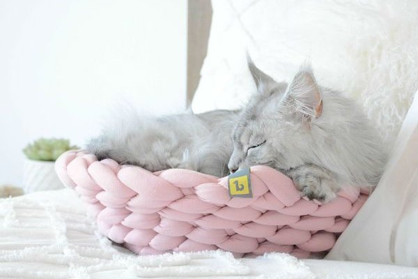 be one breed knitted pink bed with cat