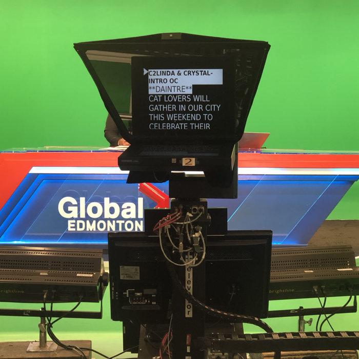 Global Edmonton TV Interview Edmonton Cat Festival