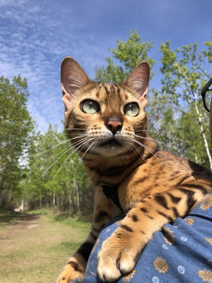 Suki the Adventure Cat