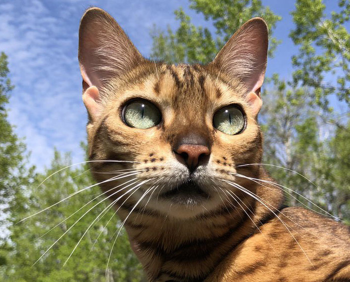 Suki the Adventure Cat header
