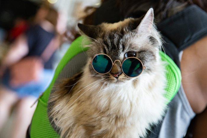 Edmonton Cat Festival Cats