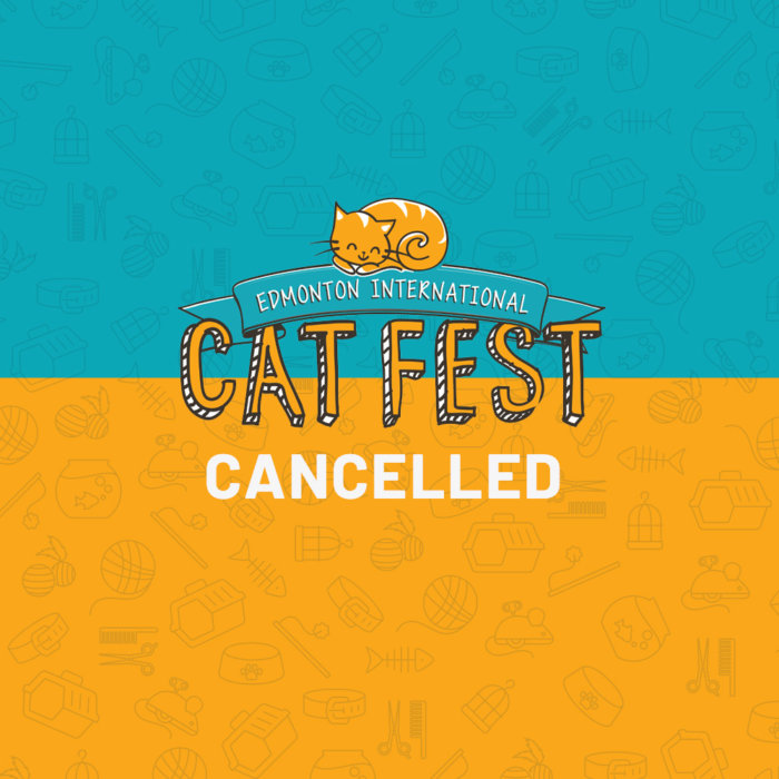Cat Festival Cancelled 2020 1