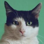 Edmonton Cat Festival Video Contest