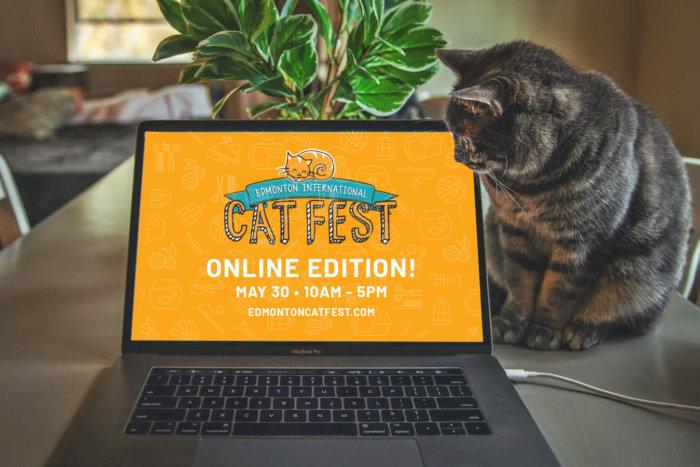 Cat Fest Online Edition Promo 5