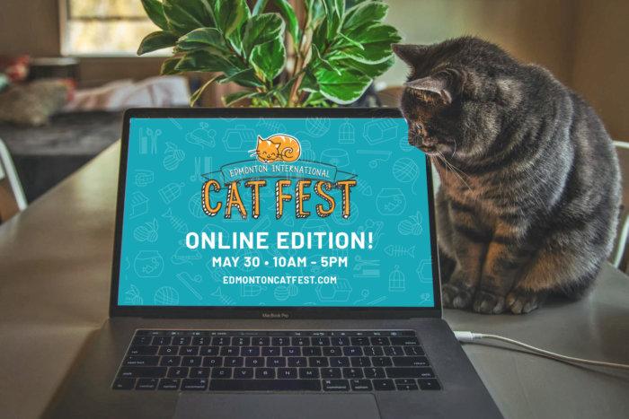 Cat Fest Online Edition Promo 6