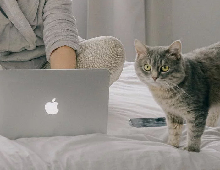 Cat Fest Online Edition Promo 8