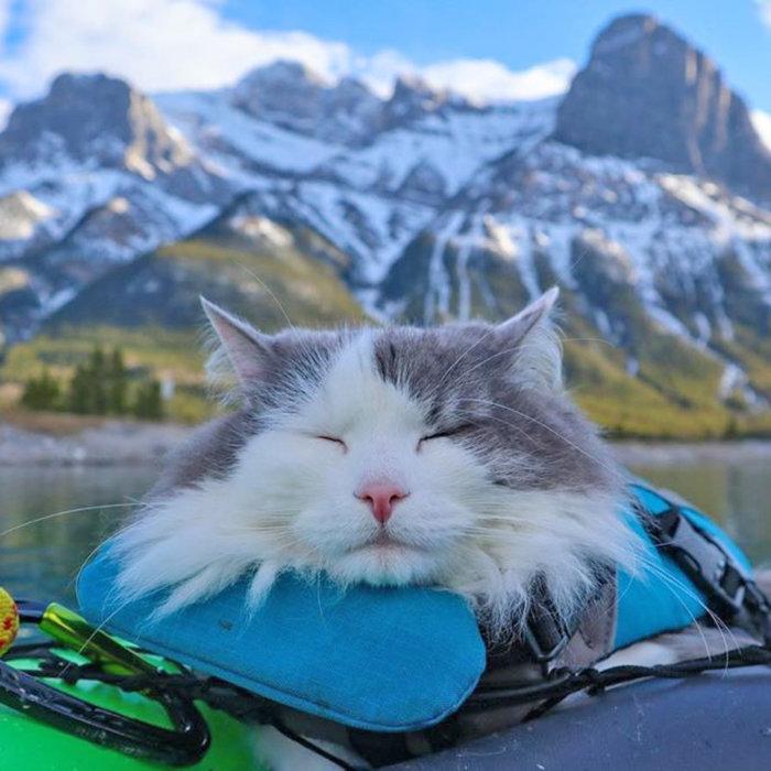 Great Grams of Gary Celebrity Cat edmonton Cat festival 1