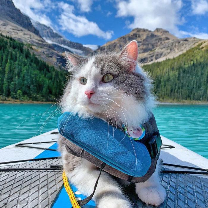 Great Grams of Gary Celebrity Cat edmonton Cat festival 2