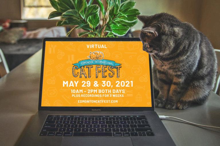 2021 Cat Computer Promo Orange
