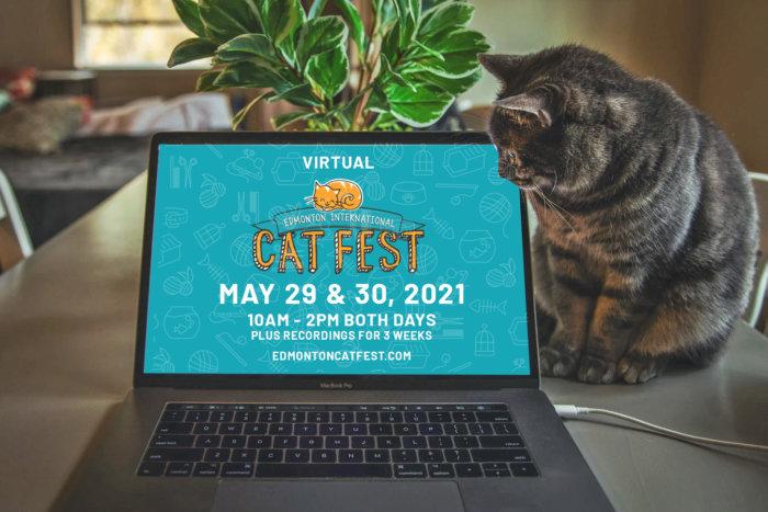 2021 Cat Computer Promo Teal