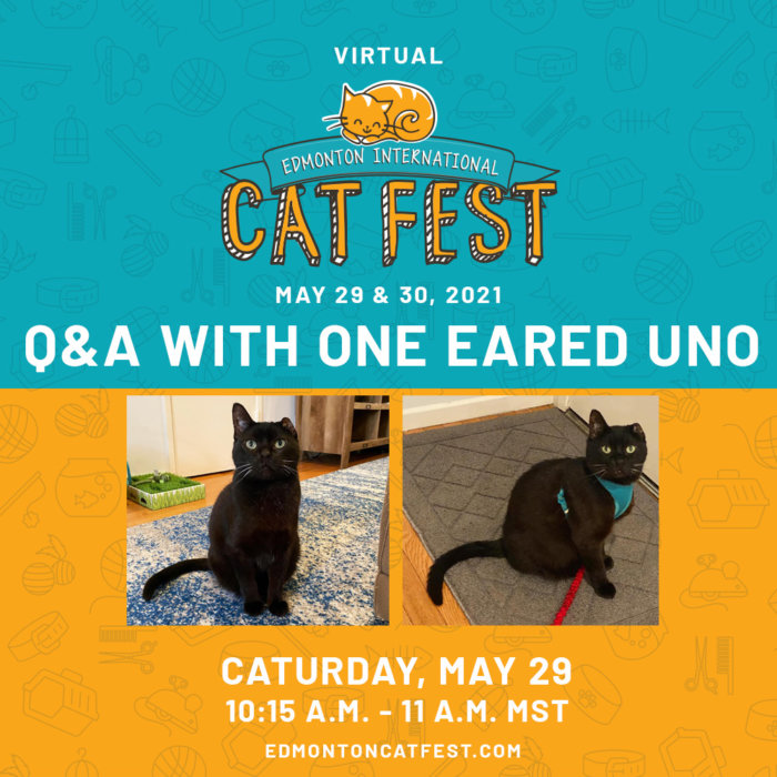 2021 Cat Fest Schedule Celeb Uno