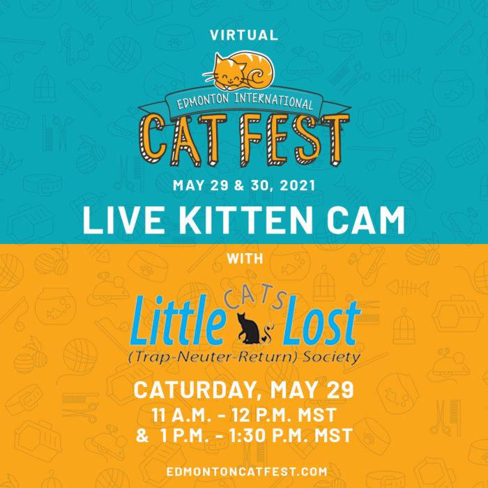 2021 Cat Fest Schedule Live Kitten Cam LCL