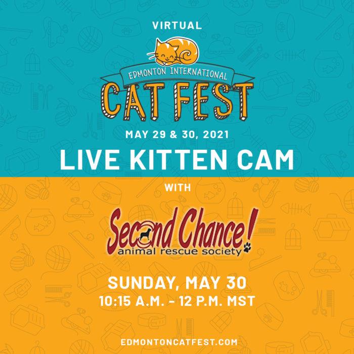 2021 Cat Fest Schedule Live Kitten Cam SCARS