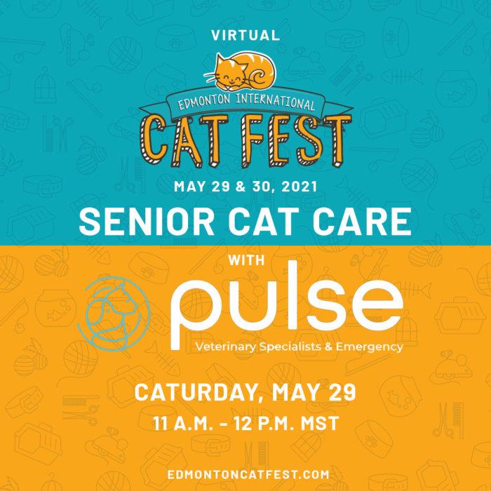 2021 Cat Fest Schedule Pulse Vet