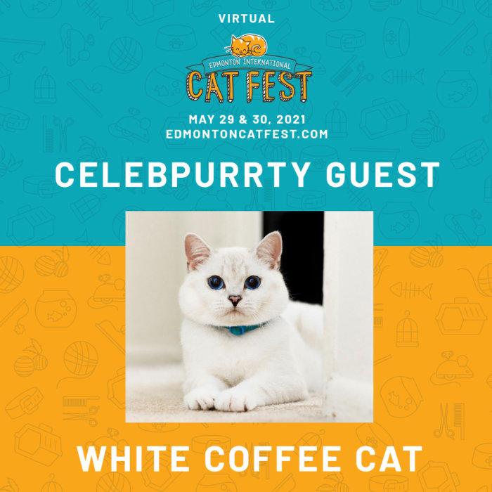 2021 Cat Fest Schedule White Coffee Cat