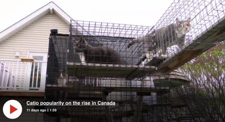 CBC Edmonton Catio popularity on the rise in Canada