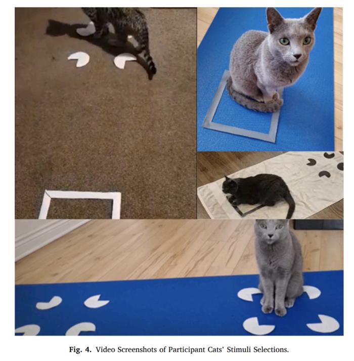 If I Fits I Sits Cat Study Research Screenshot 4