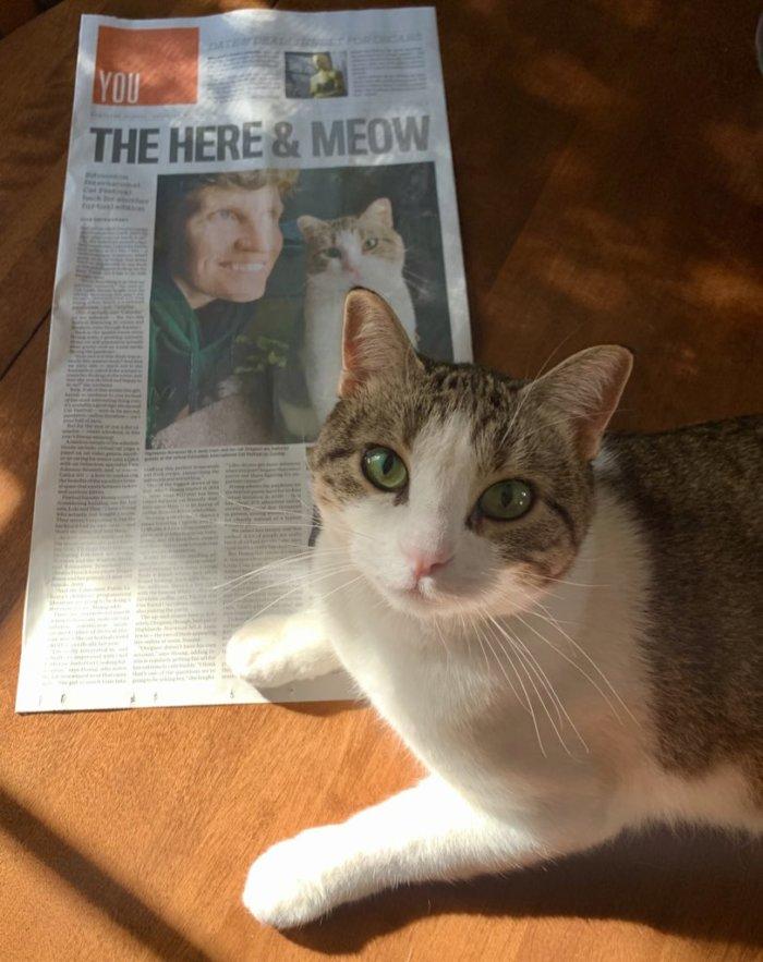 Janis Irwin Edmonton Cat Festival Edmonton Journal