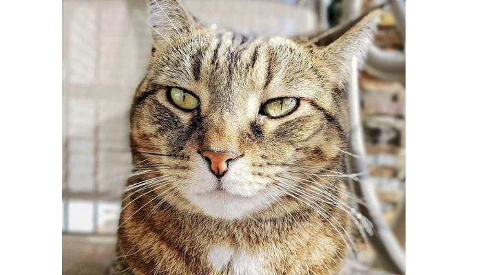 kitty mojito 2