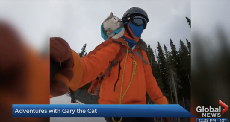 Global Edmonton Great Grams of Gary Edmonton Cat Festival