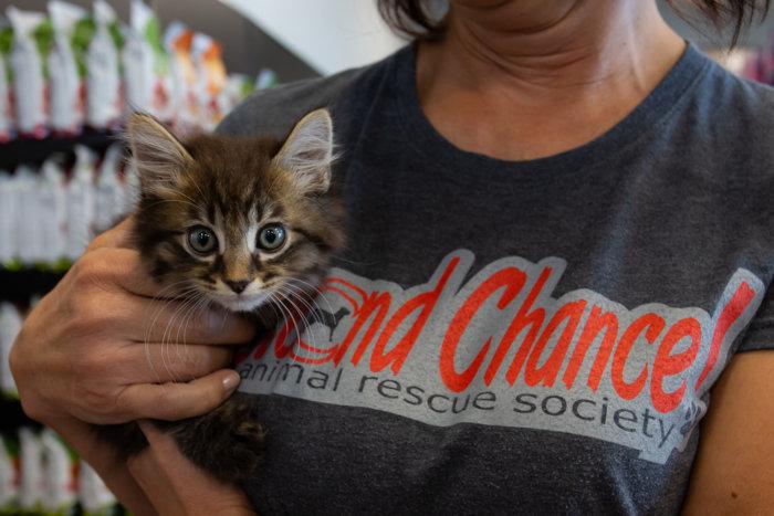 Edmonton Cat Festival Donation Local Rescues 2021 1