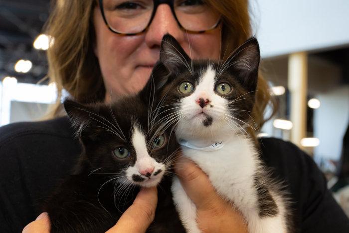 Edmonton Cat Festival Donation Local Rescues 2021 12