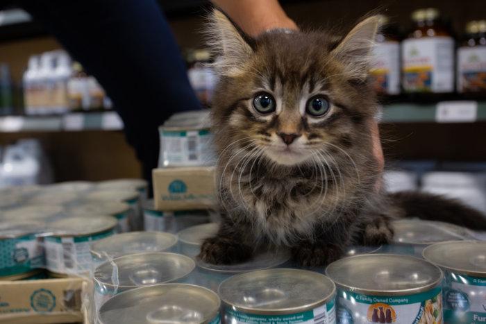 Edmonton Cat Festival Donation Local Rescues 2021 5