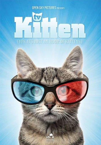Kitten TV Open Sky Pictures Edmonton Cat Festival 1