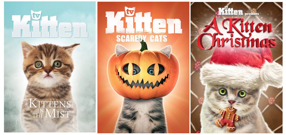 Kitten TV Open Sky Pictures Edmonton Cat Festival